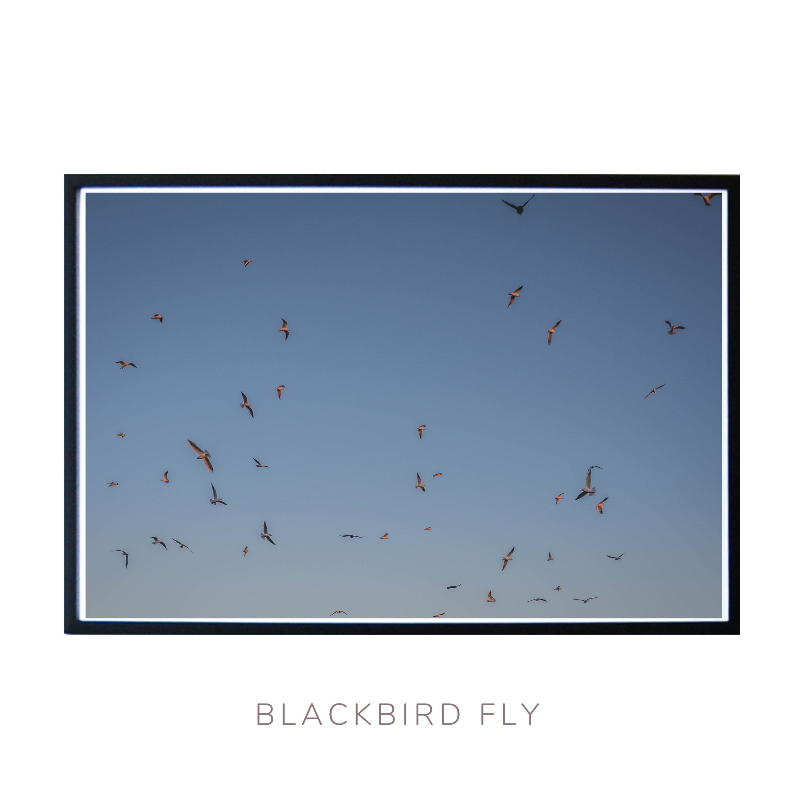 Blackbirds flying on the golden light in Black Heath Fine art wall art